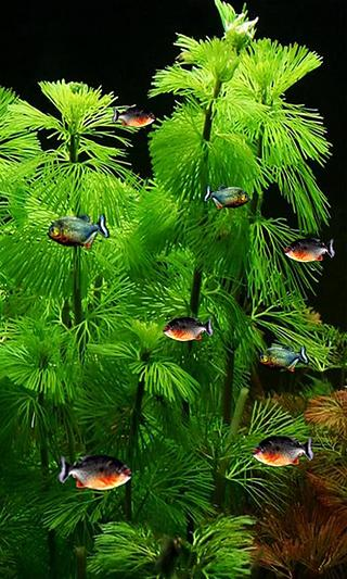 pc live wallpaper aquarium free download - Softonic