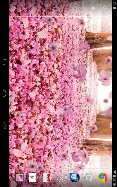 樱花步道动态壁纸